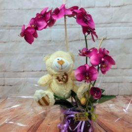 Orquídea macetero y peluche RF 653
