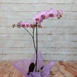 Orquídea lila y macetero dia madre RF 649