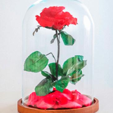Rosa la Bella y la Bestia 35€