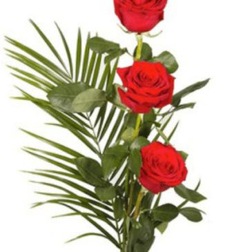 Ramo 3 Rosas Rf 020 San Valentín