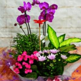 caja orquídea y plantas RF 1628