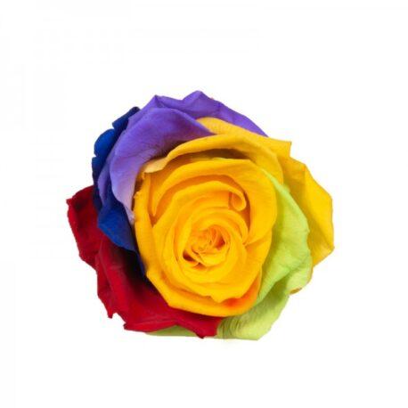 55-medium-rainbow