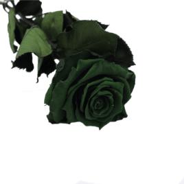 Rosa eterna Esmerald green RF 1689