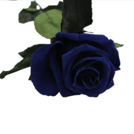 Rosa eterna Ocean Blue RF 1673